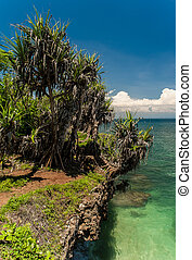 Dead end is not so dead. - Fading tropical trees and...