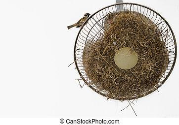 gorrión, posición, en, el, techo, ventilador,