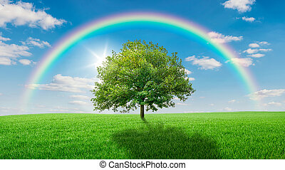Oak tree on a green meadow covered by a rainbow