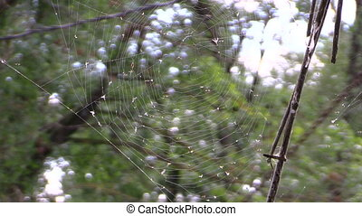 spider web - Spider web with lot of fly in it on nature...