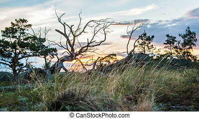 Dry Landscape With Dead Tree