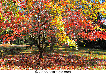 Autumn Colours - Beautiful sunlit autumn colours in the...