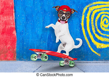 skater boy dog - jack russell skater dog with red cap ready...