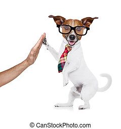 business dog high five - jack russell dog high five with...