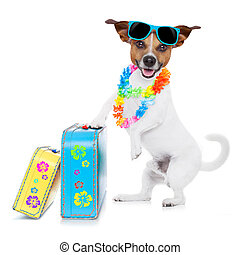 summer vacation dog - jack russell dog packing luggage and...