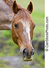 Brown horse portrait - beautiful horse portrait with some...