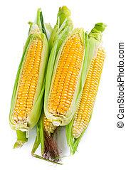新鮮, 玉米, 葉子, 綠色
