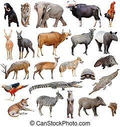 Tiere In Asien Liste
