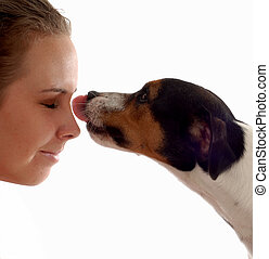 dog giving kissed - jack russel terrier giving love to owner
