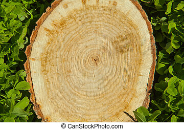tree stump on the grass, top view - tree stump on the green...