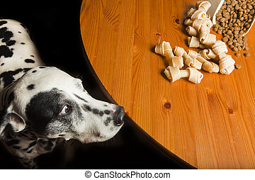 Dalmatian - Temptation.