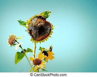 Sunflower in retro style