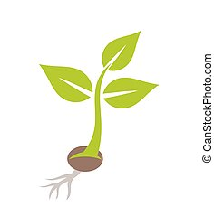 Plant seedling. Vector illustration