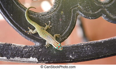 young gecko on table - This young gecko visited us every...