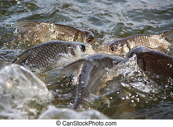 pez, en, piscina,