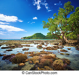 Beautiful shallow sea with coral reef and green island on...