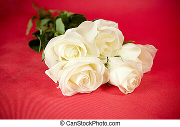 White roses on red