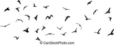 Birds, gulls, black silhouette on white background. Vector...