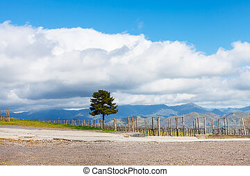 white clouds over vineyard in Etna region - white clouds...