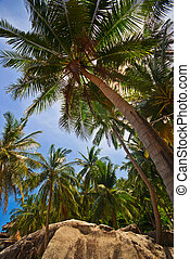 Coconut Palm Groove exotic Scene