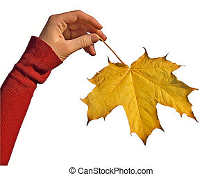 Fall Maple leaf in Hand