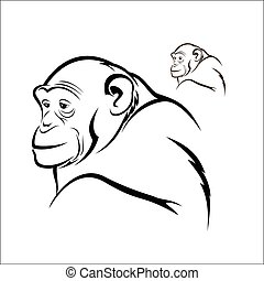 Chimpanzee - Vector illustration : Chimpanzee on a white...