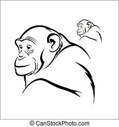 Chimpanzee - Vector illustration : Chimpanzee on a white...
