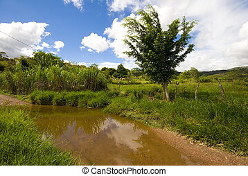 Country side - Scene in the Country side of Brazil .