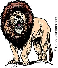 wild lion isolated on the white background