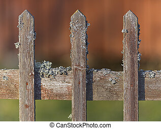 Old wooden fence weathered with moss, detailed closeup