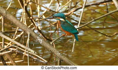 Kingfisher bird on branch of tree