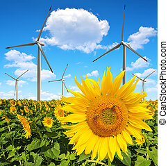 Sunflower field with wind turbines Spring landscape