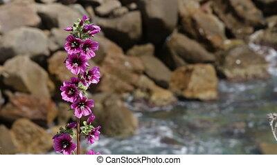 Wild Mediterranean flowers