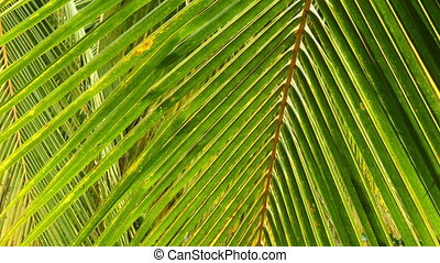 Palm leaves closeup background