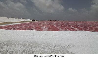 Rose Caribbean salt lake