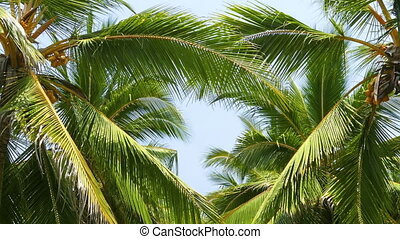 heart shape from the leaves of coconut palms