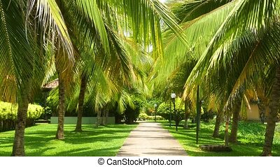 beautiful alley between coconut palms