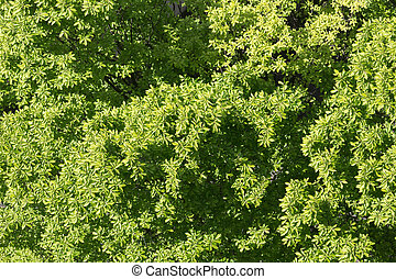 tree top view