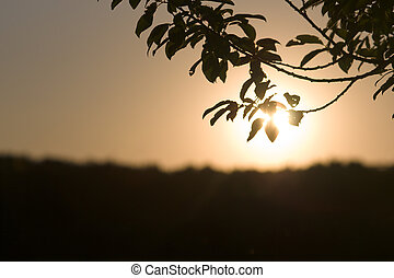 tree branch in front of sun on horizon