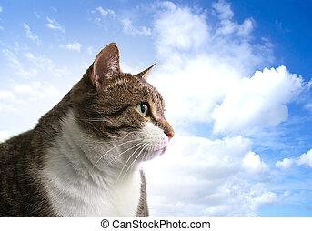 Big fat cat - Head of big fat cat over sky background