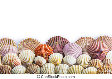 Seashells isolated on a white background with space for...