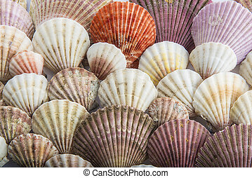 Background made of seashells - Background made of different...