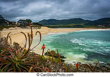 Plants and view of a beach in Carmel, California.