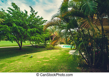 Green exotic garden. dominican republic. Pathway in tropical park - abstract travel background.