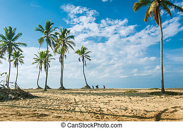 Tropical mountain forest, palm trees in sunlight. Sunset landscape at Dominican Republic. Nature of caribbean island