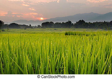 Green grass on meadow with sunset