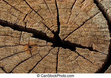 Surface of the stump.