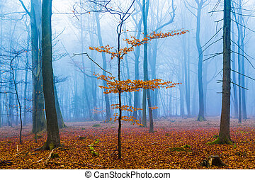 Fantasy forest with fog and orange foliage
