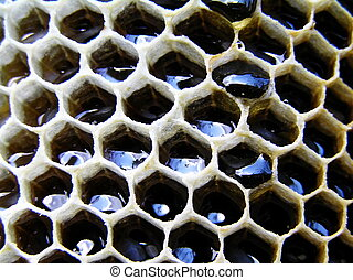 Honey in honeycombs. - There is honey in honeycombs. He is...