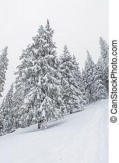 snow, winter, landscape, snowy - Ukrainian Carpathian...